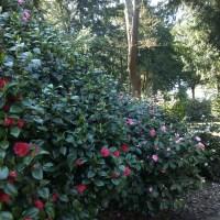 BOOKING OPEN: Garden Masterplans and Management at Trewithen Gardens