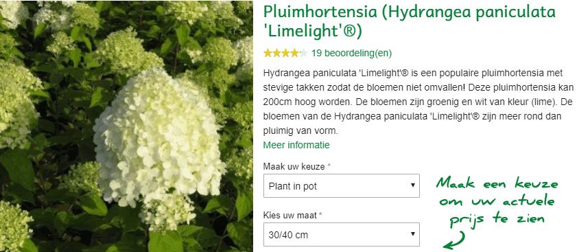 Hydrangea paniculata Limelight kopen