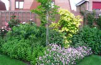 onze tuin 6 juni 2008 010