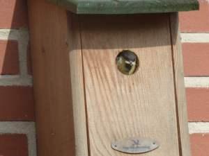 Vogelvriendelijke tuin (2)