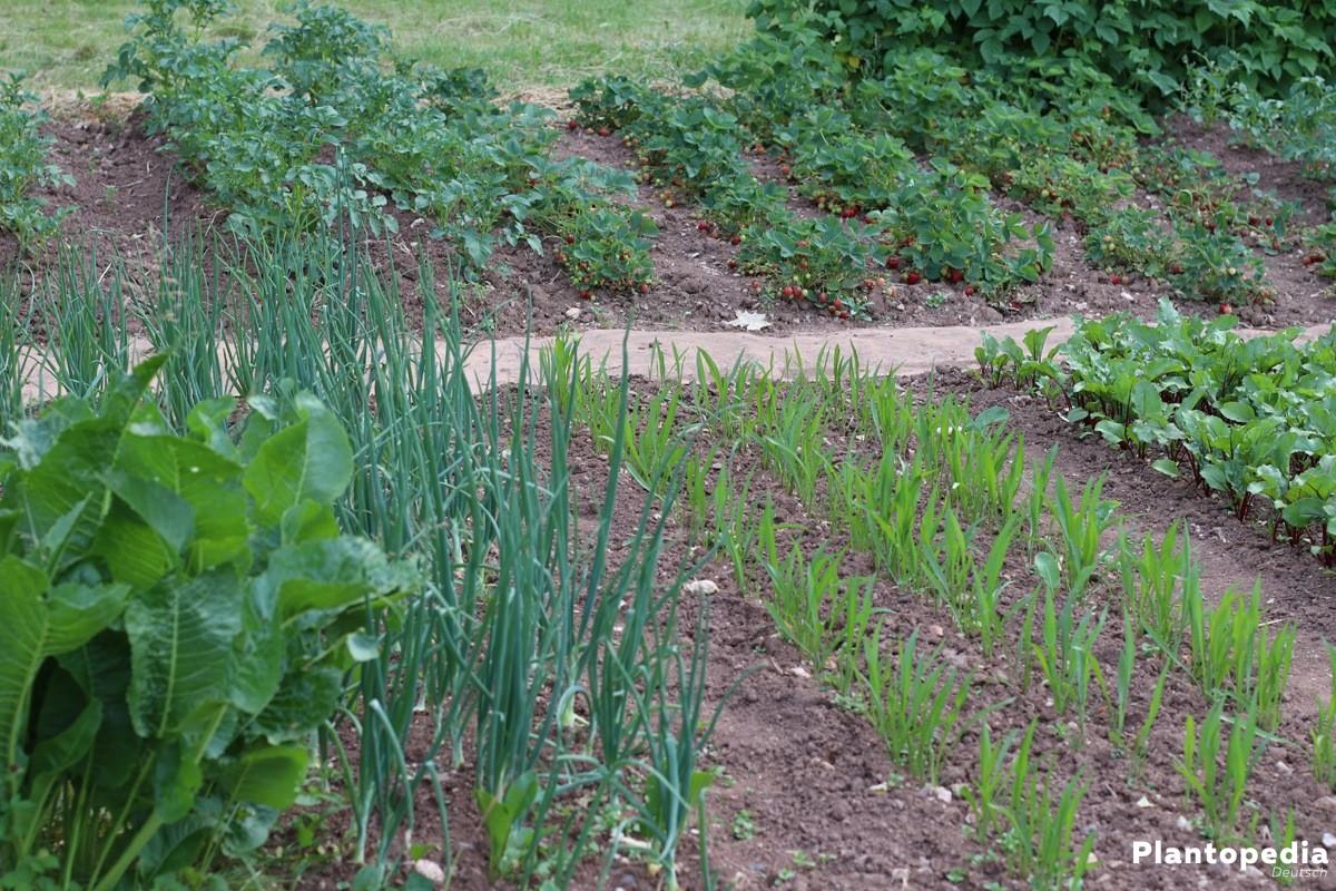 Wie Lege Ich Einen Steingarten An Welche Pflanzen Eignen Sich Für