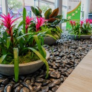 Colorful Plants In Office