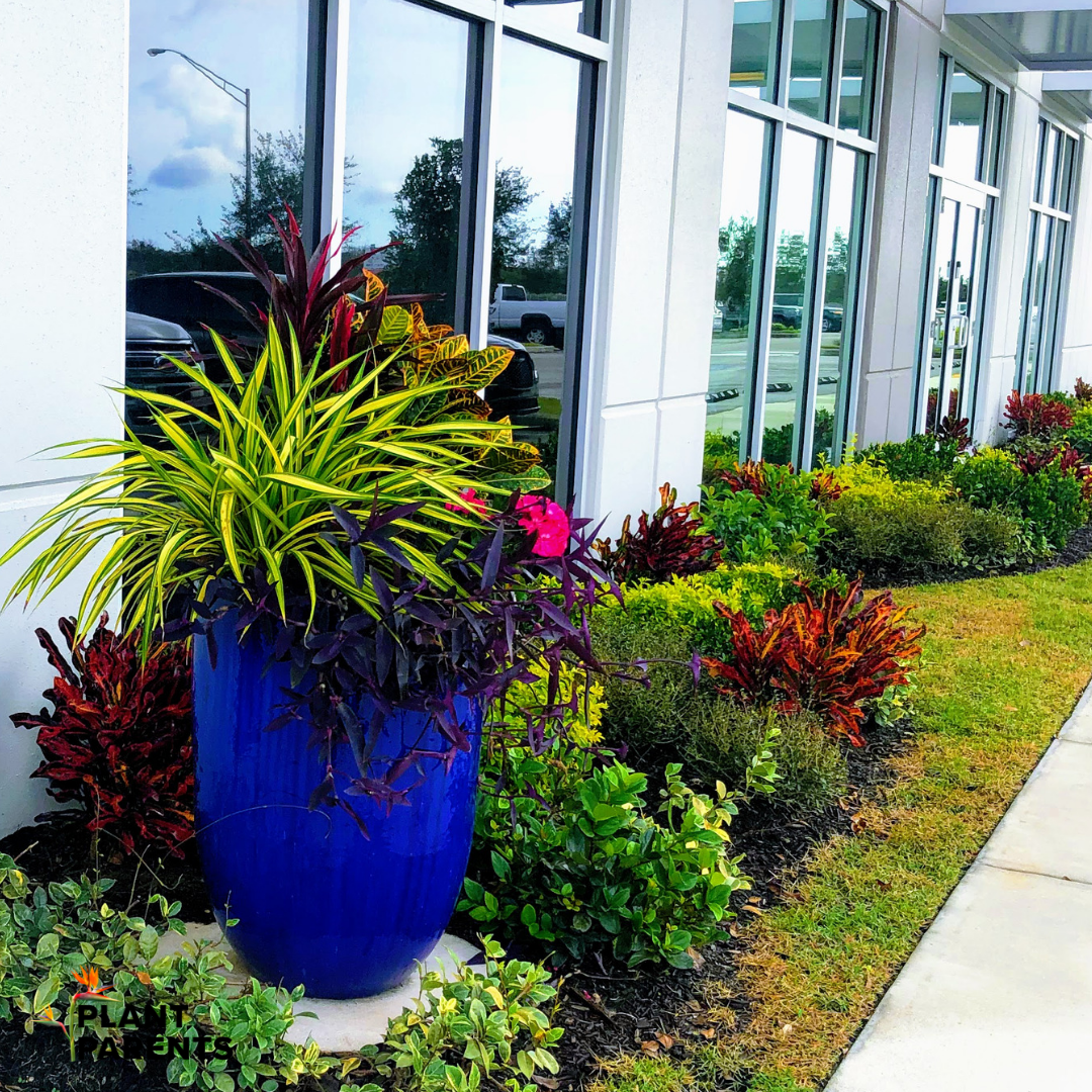 Colorful tropical plants for business