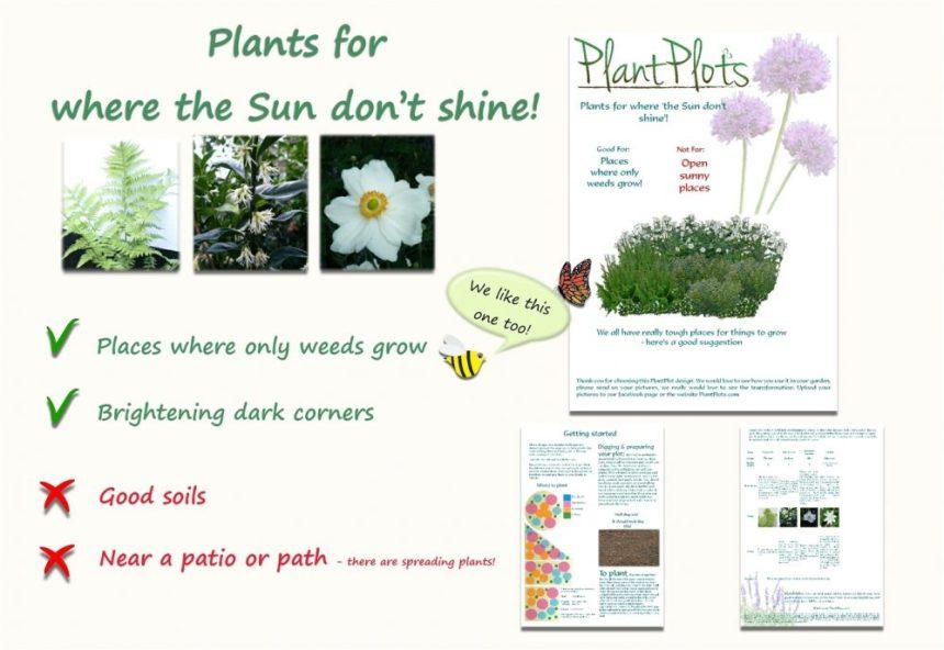 plants for shade garden border design product
