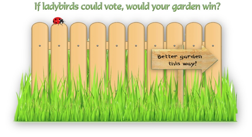 final image - ladybird vote
