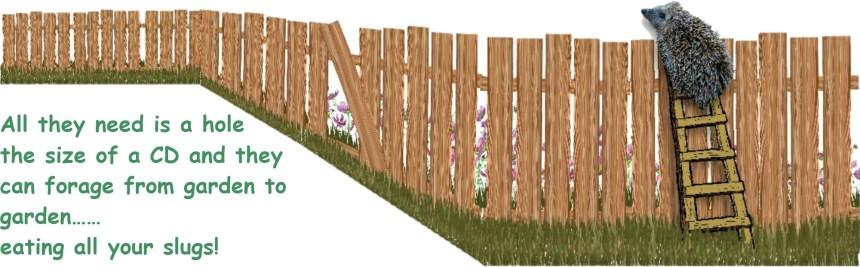 hedgehog climbing the fence