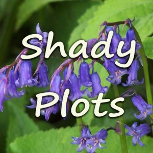 Plots For Your Shady Bits