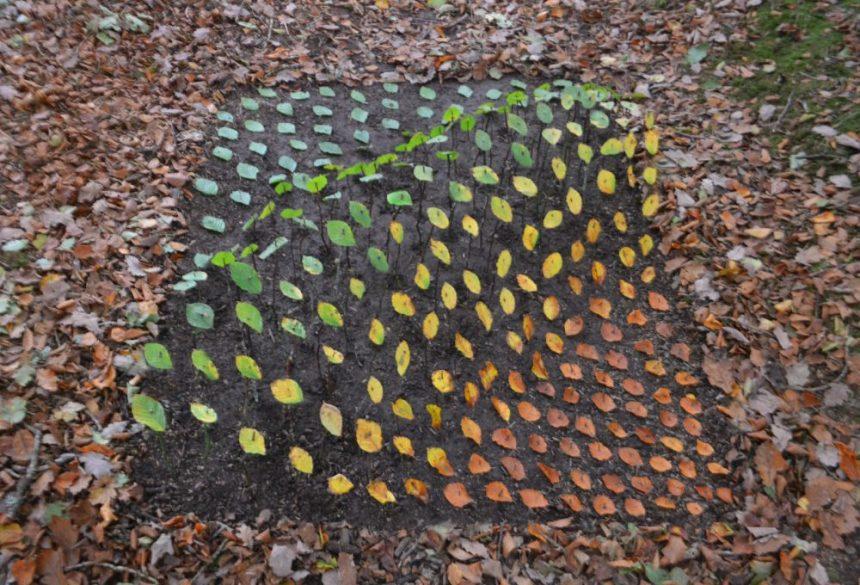 leaf sculpture multicoloured leaf