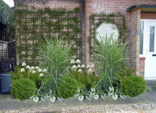 how to site plants in a border