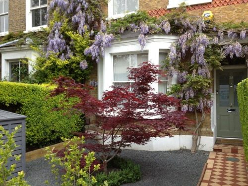 designing front gardens a well designed front garden, simple easy care with specimen tree