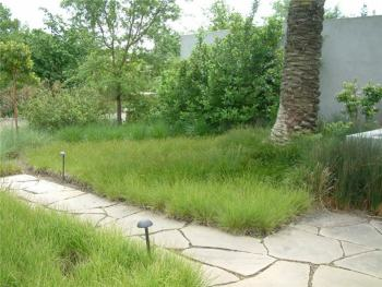 carex grass lawn - low maintenance garden planning tips family gardens