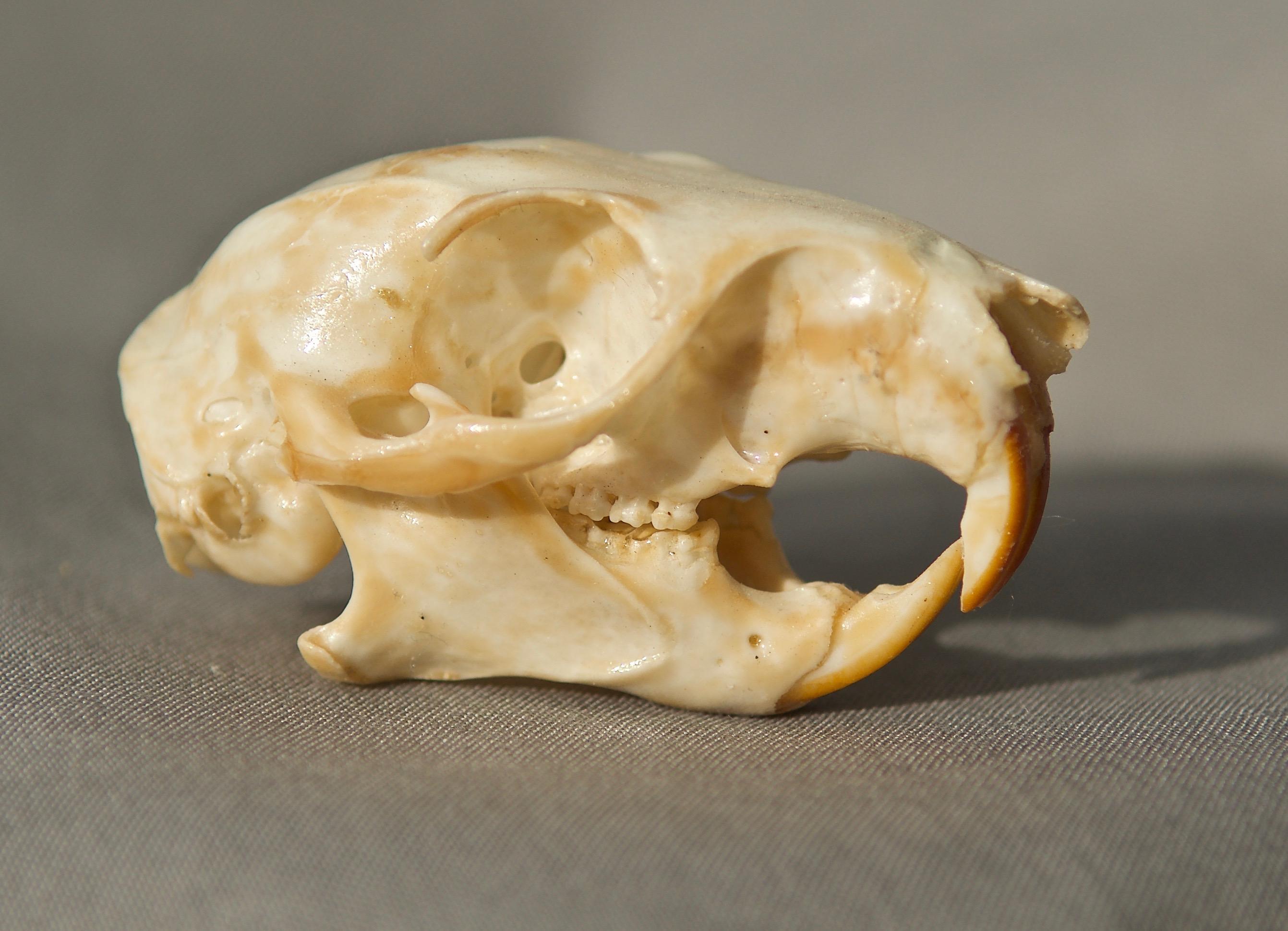 Mammal Skulls Plants And Animals Of Northeast Colorado