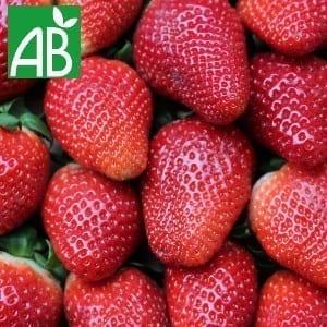 Plants Petits Fruits Fraisier Allergro A Bio