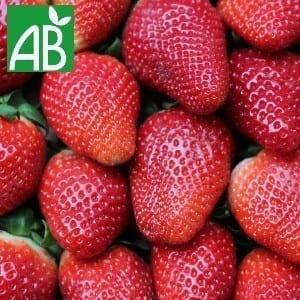 Plants Petits Fruits Fraisier Allergro A+ Bio