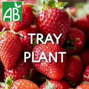 Petits Plants Fruits Rouges Fraisier Darselect Tray Plants