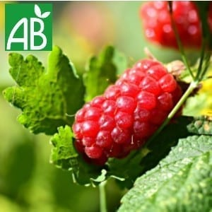 Plants Petits Fruits Framboisier Mailling A+ Bio