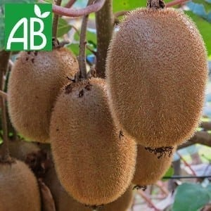 Plants Petits Fruits Kiwi Assai Bio