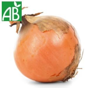 bulbe d'oignon pro biologique AB