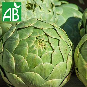 Plant chaud d'artichaut Impérial Star biologique à feuilles rigides et vertes