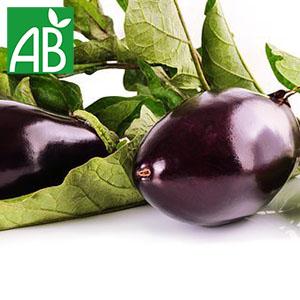 Plant chaud d'aubergine Bonica biologique à fruit ovale et violet