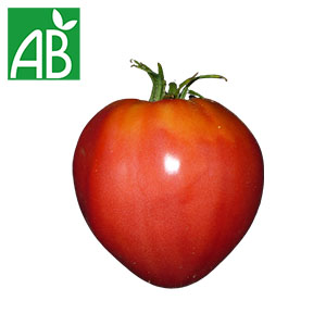 Plant chaud de tomates Coeur de Boeuf biologique à fruit gros, rouges et pointue en forme de coeur