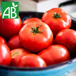 Plant chaud de tomates Montfavet biologique à fruit ronds et rouges