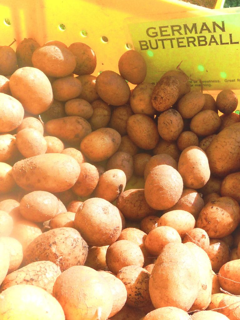 Butterball Potatoes at Chicago's Green City Farmer's Market