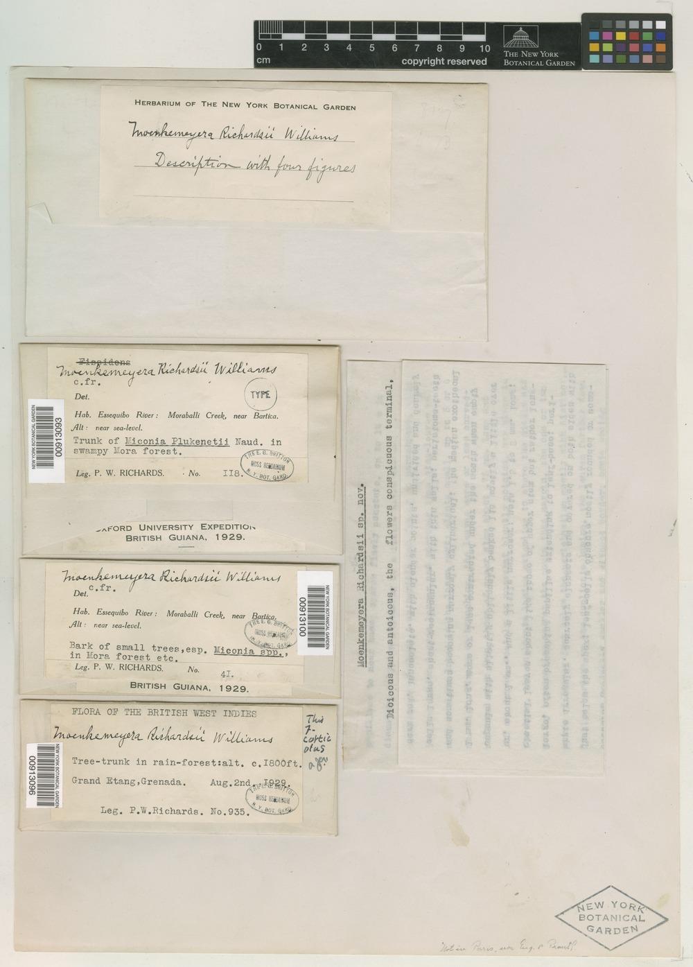 Paratype of Moenkemeyera richardsii R. S. Williams [family FISSIDENTACEAE]