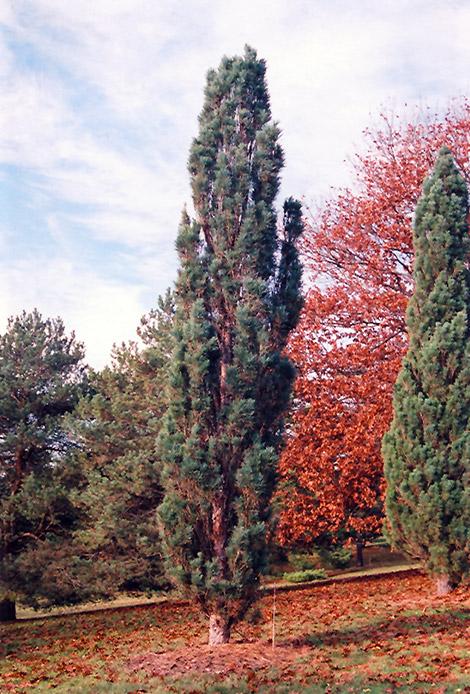 Evergreen Plants Zone 7