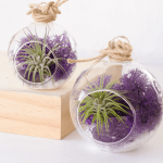Purple Air Plant Terrarium With Amethyst Crystal Plants And Beautiful Things