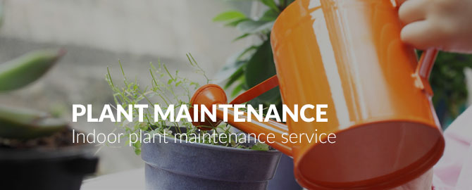 indoor-plant-maintenance