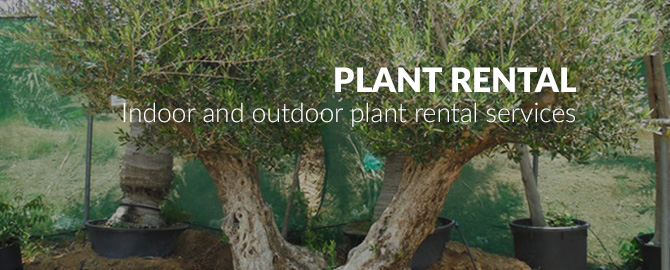 plant-rental-plantscapes