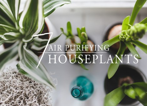 Bring Natural Purifiers home