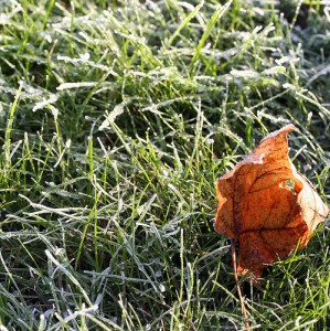 A frost coated lawn