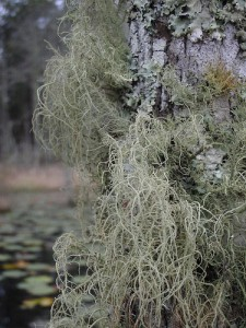 spanish moss hanging from trees and rocks
