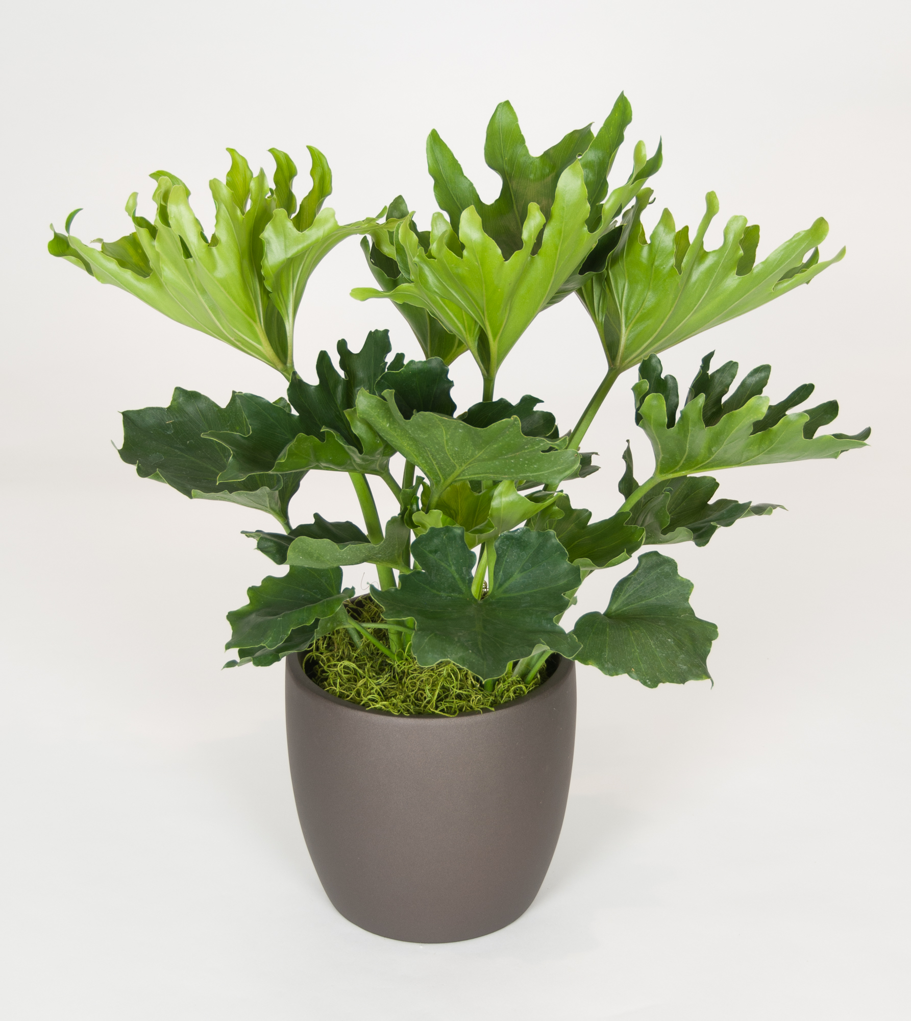 Plants For Medium Light Plantscapes