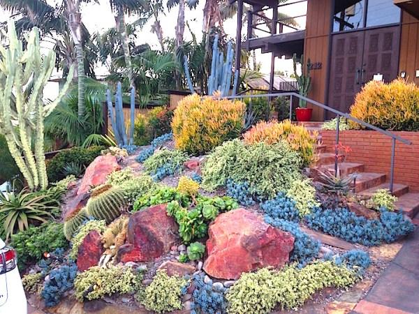 plants comprehensive succulent