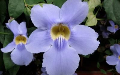 Awakening with Nature Elementals, w/ Camilla Blossom