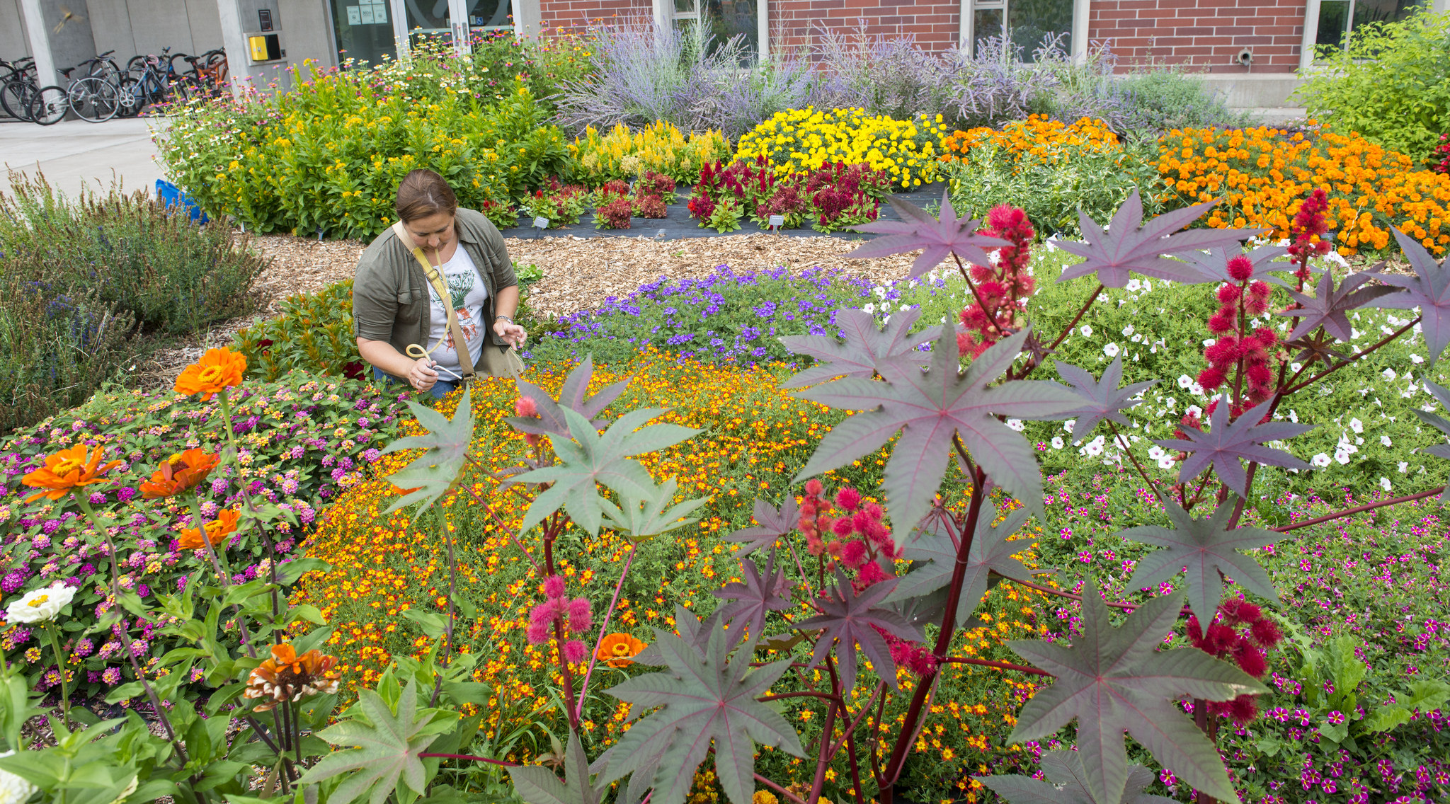 Dirty your hands and feed your brain as a Master Gardener