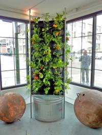 Aquaponic Vertical Vegetable Garden  Plants On Walls