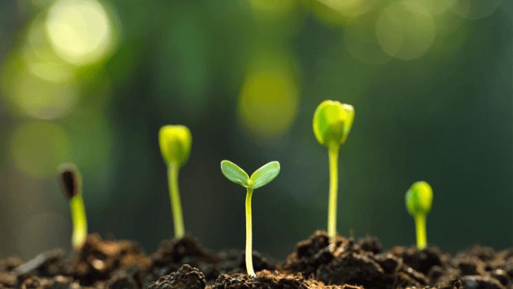 soil types impact plant growth