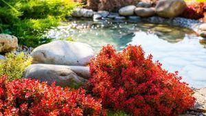 landscape design principles - water feature