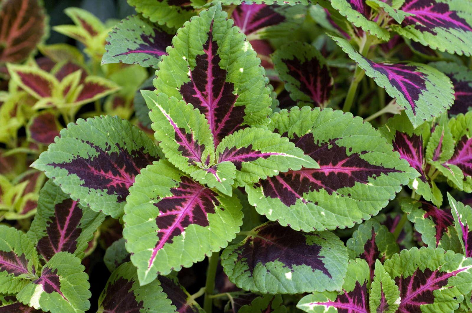 blumen garten pralle sonne mit diesen pflanzen wird ihr. Black Bedroom Furniture Sets. Home Design Ideas