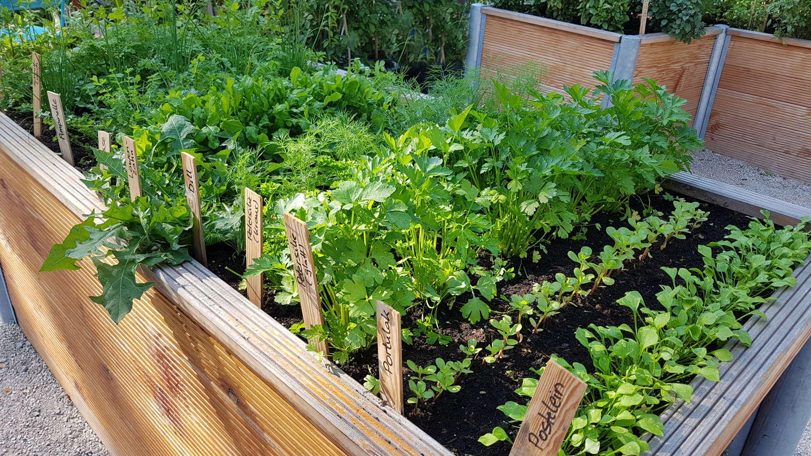 Hochbeet Krauter Vertikale Beete Mit Erdbeeren Und Krautern Bepflanzen