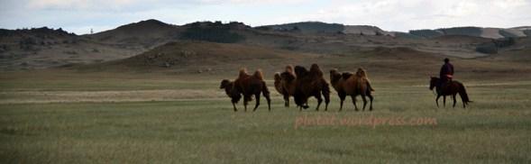 mongoliafotog10
