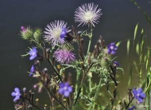 3.1 Canícula flores (FILEminimizer)