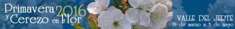 cerezo en flor 2016