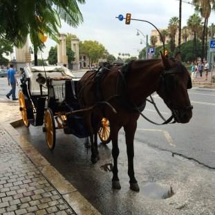 Carrozas en Málaga