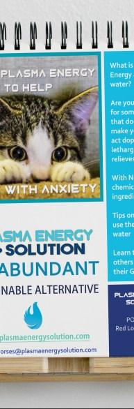 kitten report on easel