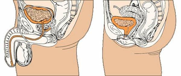 scăderea erecției în timpul cauzelor actului sexual ceea ce duce la curbura penisului